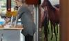 horse4humans_2013